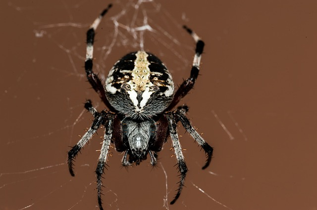 蜘蛛 夢占い