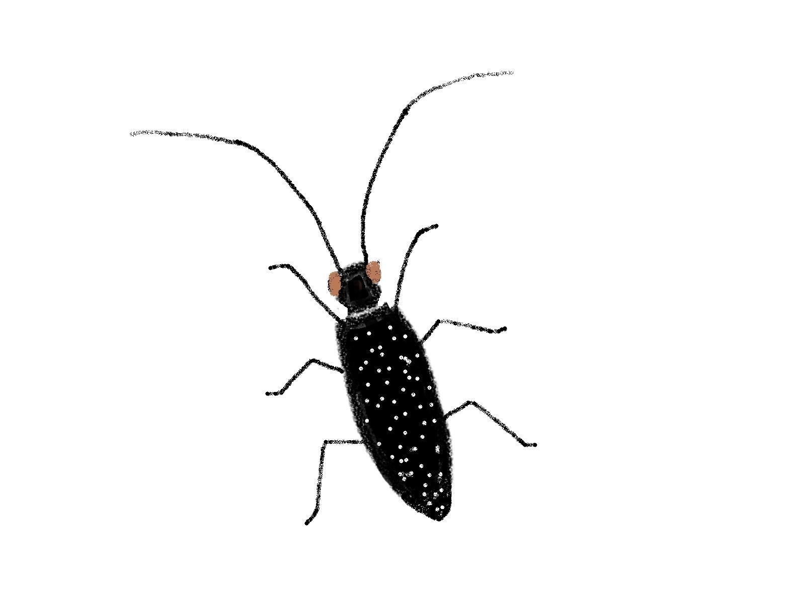 カミキリムシの画像 p1_28