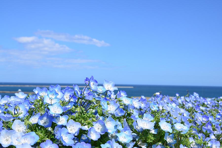 出典:国営ひたち海浜公園