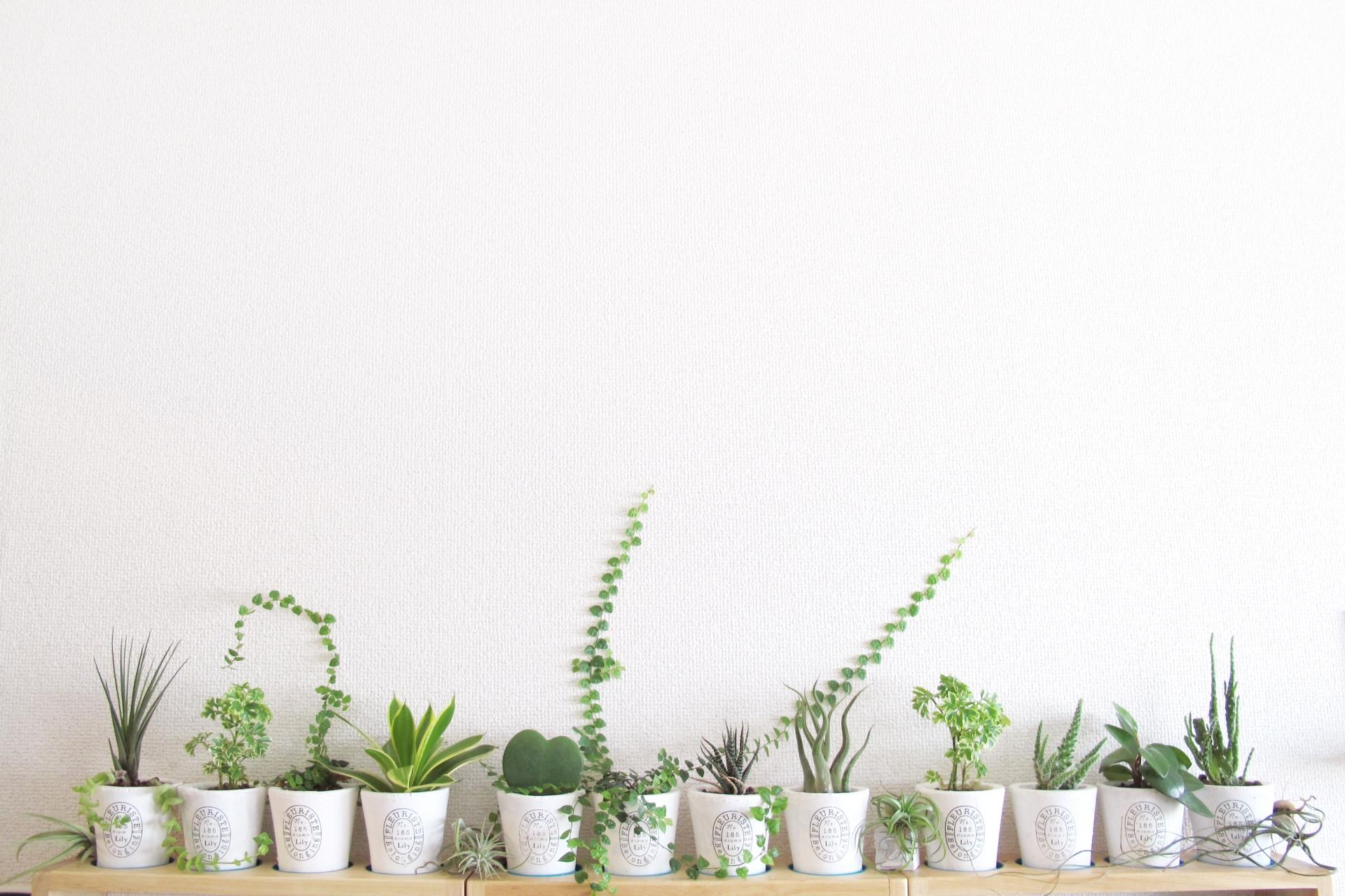 小さな観葉植物を並べてオシャレに